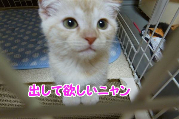 20150709_223107_R.jpg