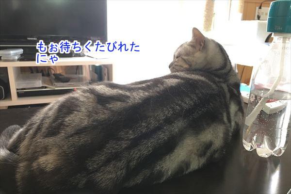 20170105_142957_R.jpg