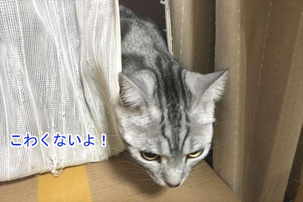 20170105_170550_R.jpg