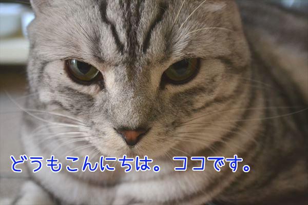 20170122_150803_R.jpg