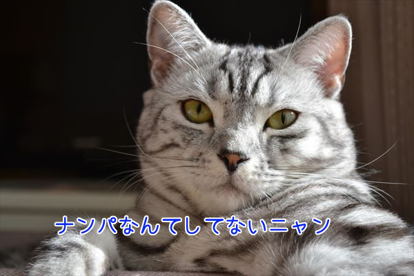 DSC_1108_R.jpg