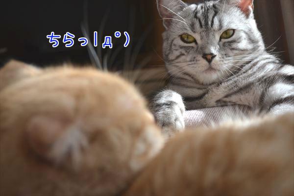 DSC_1113_R.jpg