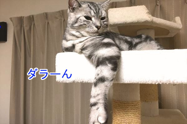 IMG_3281_R.jpg