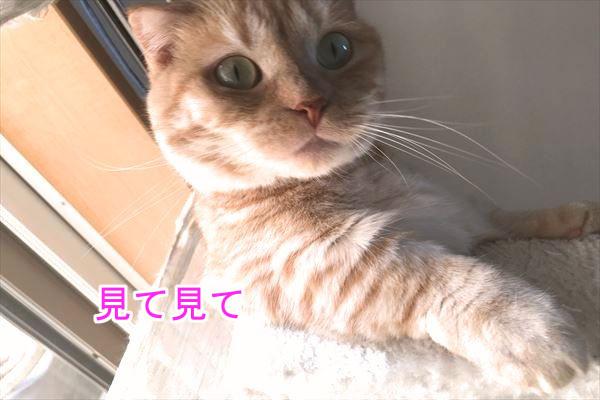 IMG_3291_R.jpg