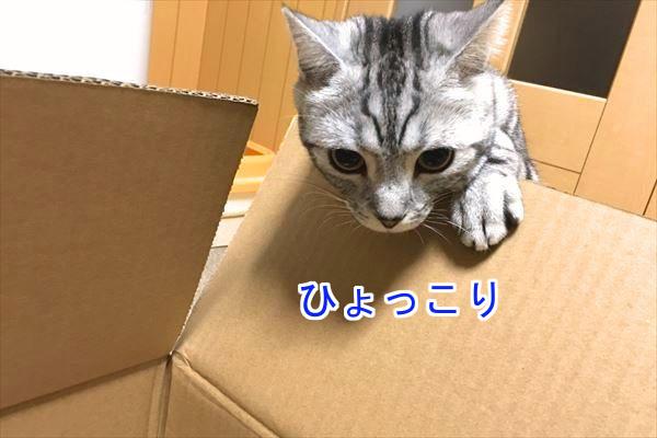 IMG_3311_R.jpg