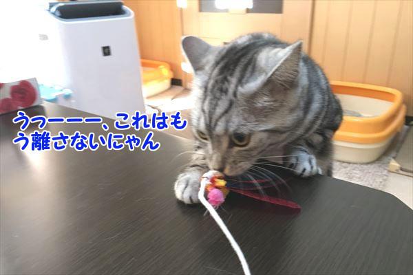 IMG_3521_R.jpg