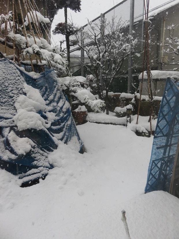 冬ー335