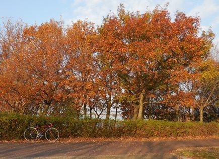 加古大池紅葉1