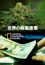 【動画】世界の麻薬産業2 大麻