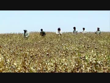 【動画】世界の麻薬産業1 ヘロイン