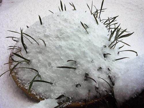 雪景色170115-4