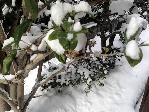 雪景色170211-1