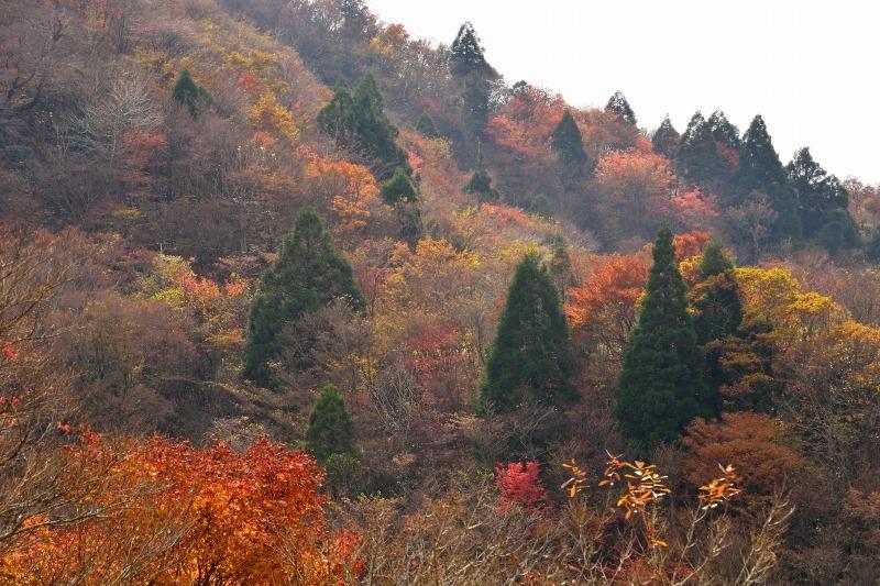 161113釈迦岳 (10)