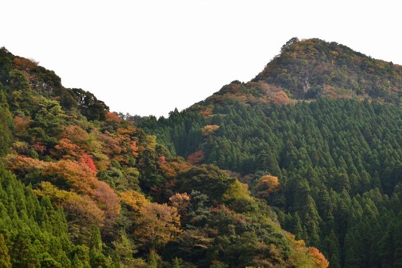 161113釈迦岳 (17)