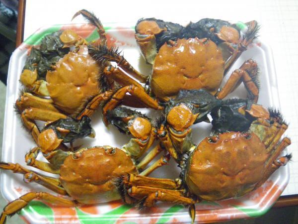 2016モクズ蟹