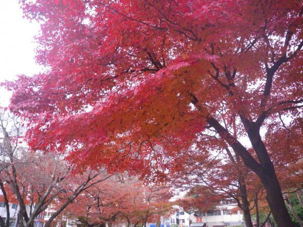 粕森公園の紅葉