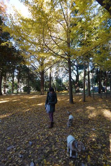 06黄色の絨毯