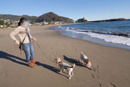 003朝の海岸散歩2