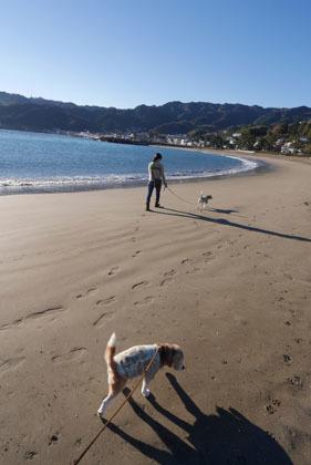 002朝の海岸散歩