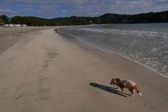 100弓ヶ浜の海岸