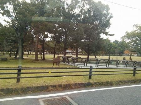 さらっと流した奈良公園