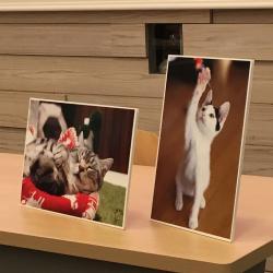 猫と私の生活~今すぐできる!愛猫の冬支度~2☆
