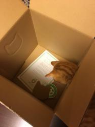#猫バンバン箱利用法☆
