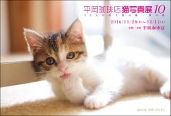 平岡珈琲店猫写真展2