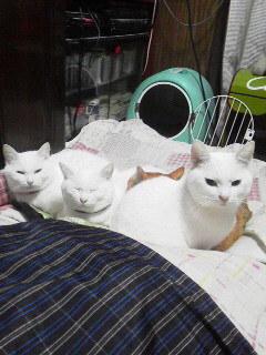 白猫トリオ2