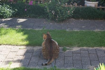 久しぶりに庭の真ん中まで出てみた