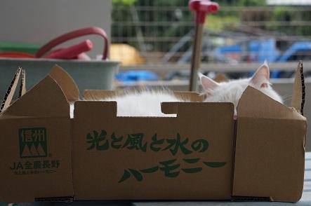 JA長野さん、ちょうどいい箱ありがとう