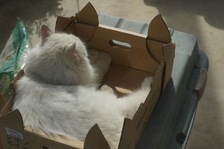箱までぬくい~