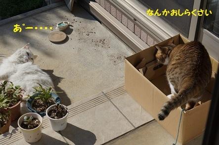まるちゃん入りま~す・4