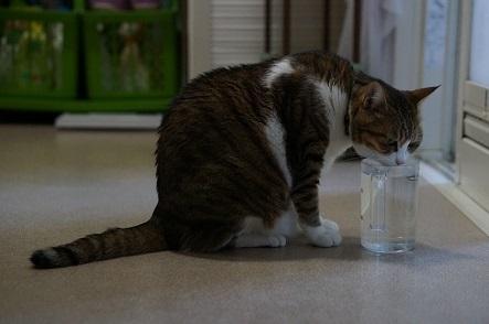 オーダーごとにいれてもらえる水
