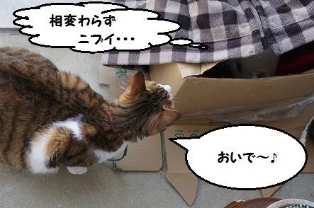 猫の心、猫知らず。
