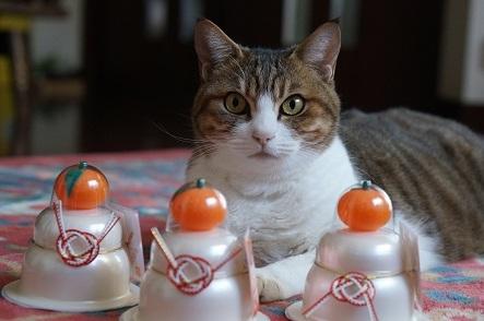 猫にお餅?