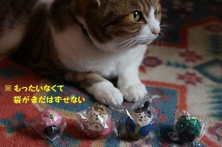 待望のconcombre猫のお雛様