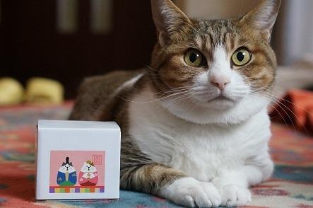 箱入り猫のお雛様と箱入り猫娘