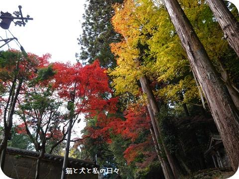 20161124-010.jpg