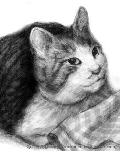 くろちゃんのイラスト