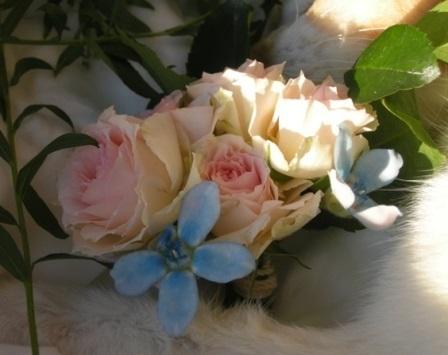 DSCN2007花束