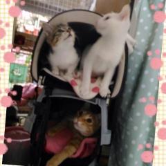 プリンちゃん&チョコちゃん&バニラくん
