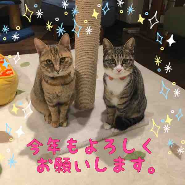 fc2blog_201701031536412b7.jpg
