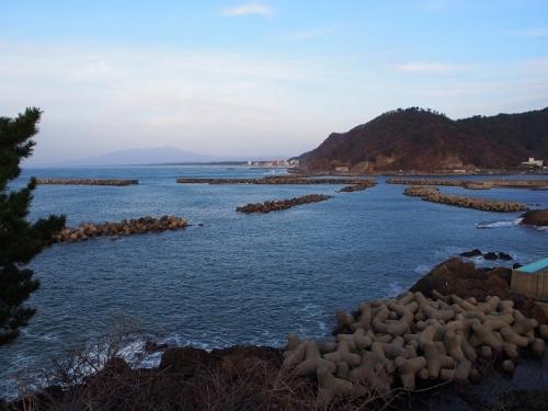 賀茂クラゲ(2)