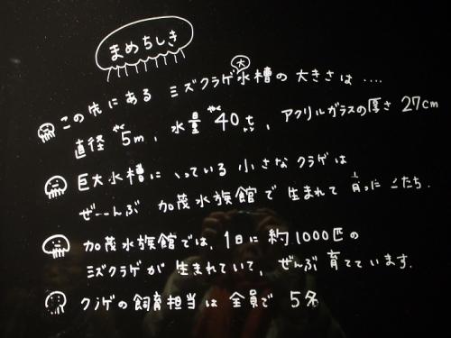 賀茂クラゲ(13)