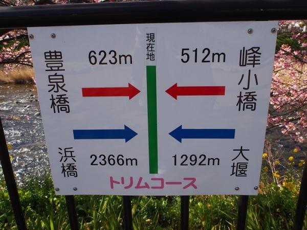 2017河津桜(10)
