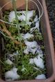 初雪11月