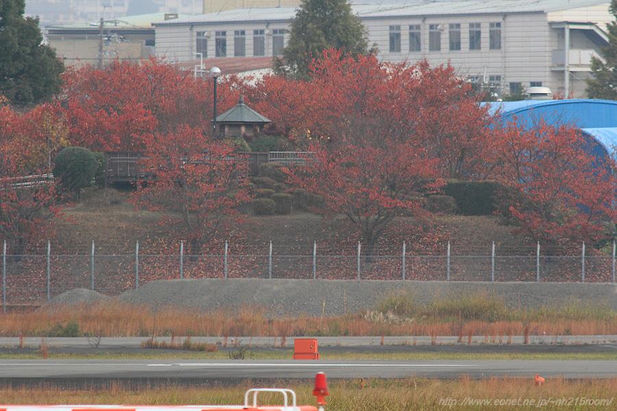 下河原緑地展望デッキ周辺の紅葉@RWY14Rエンド・猪名川土手