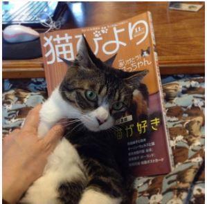 ナンチャッテ表紙猫