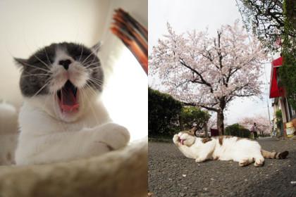 フォトパス 猫コミュ BESTにゃんこ
